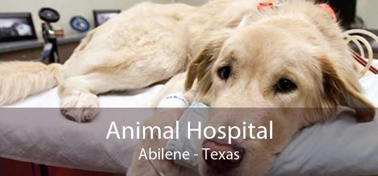 Animal Hospital Abilene - Texas