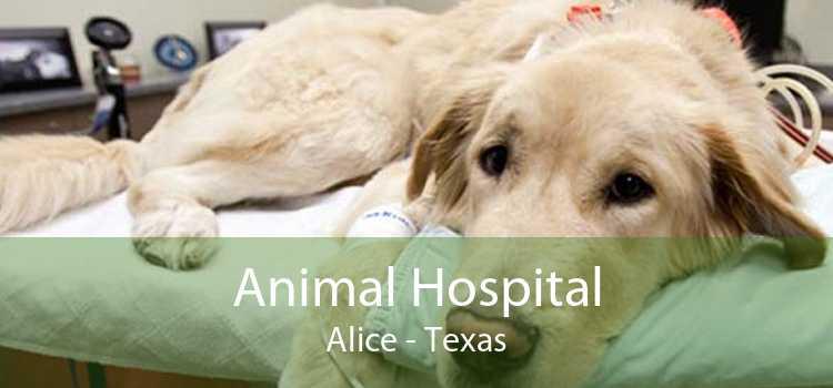 Animal Hospital Alice - Texas