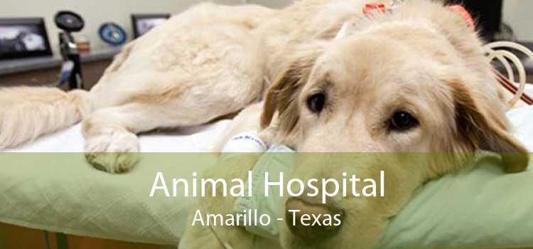 Animal Hospital Amarillo - Texas