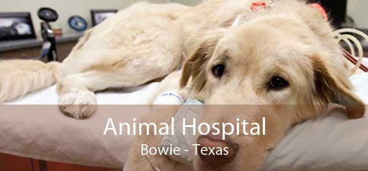 Animal Hospital Bowie - Texas