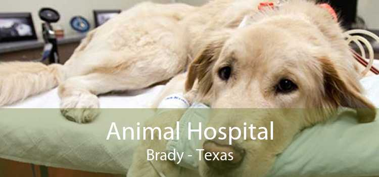 Animal Hospital Brady - Texas