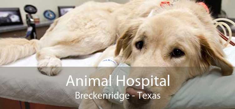 Animal Hospital Breckenridge - Texas
