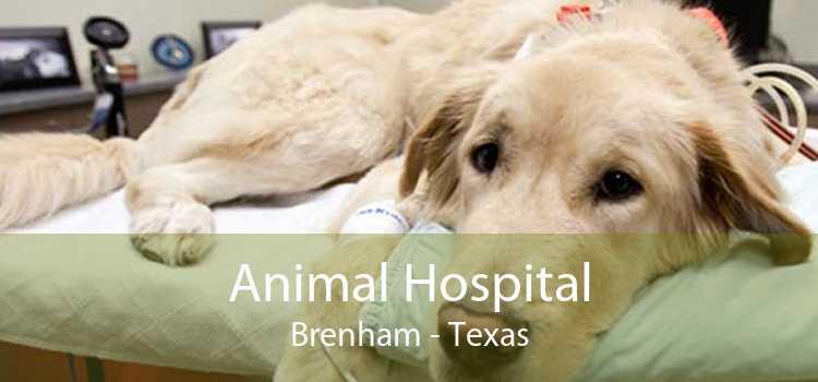 Animal Hospital Brenham - Texas