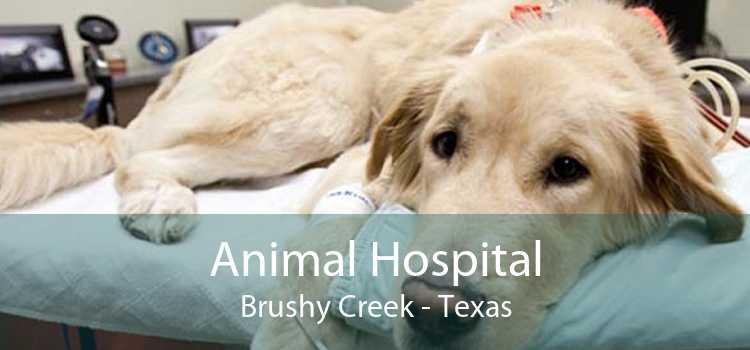 Animal Hospital Brushy Creek - Texas