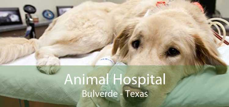 Animal Hospital Bulverde - Texas