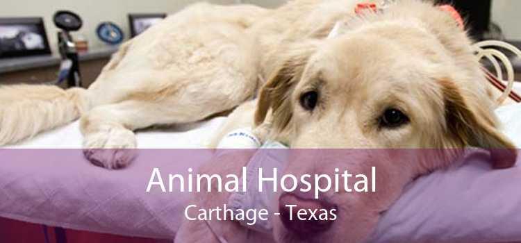 Animal Hospital Carthage - Texas