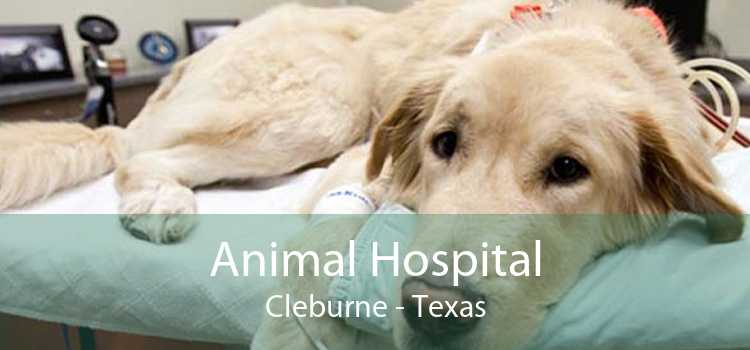 Animal Hospital Cleburne - Texas