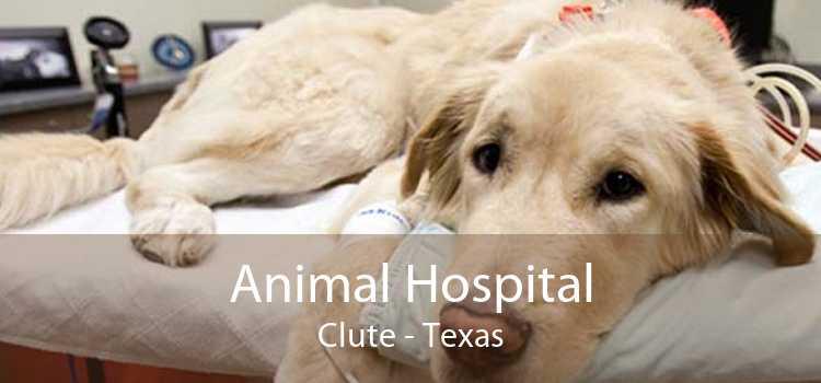 Animal Hospital Clute - Texas