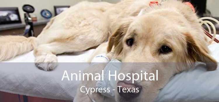 Animal Hospital Cypress - Texas