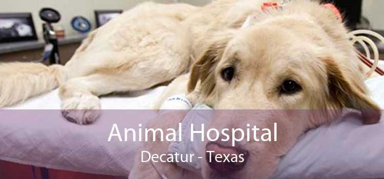 Animal Hospital Decatur - Texas