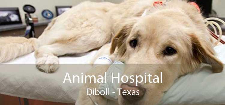 Animal Hospital Diboll - Texas