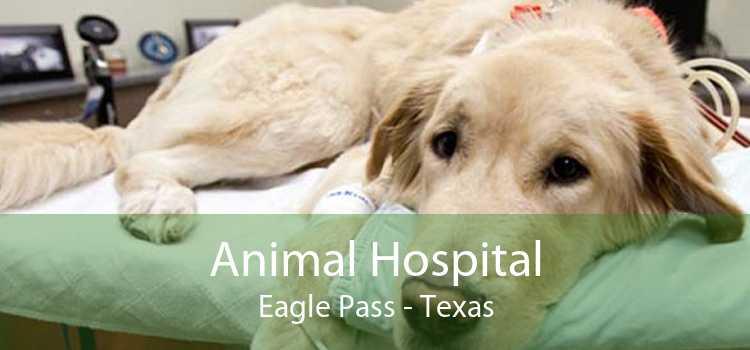 Animal Hospital Eagle Pass - Texas