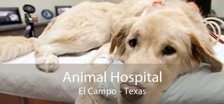 Animal Hospital El Campo - Texas