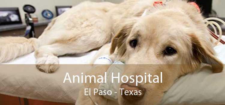 Animal Hospital El Paso - Texas