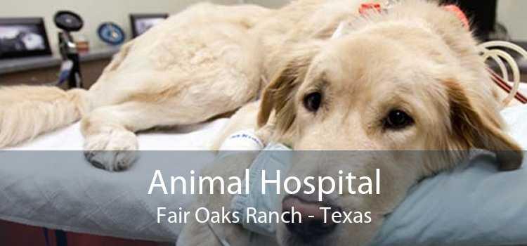 Animal Hospital Fair Oaks Ranch - Texas
