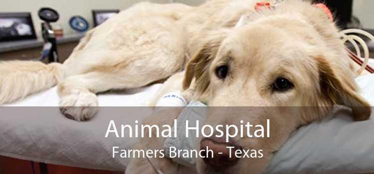 Animal Hospital Farmers Branch - Texas