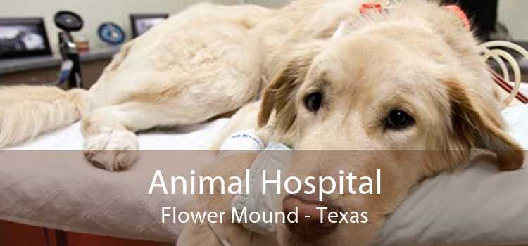 Animal Hospital Flower Mound - Texas