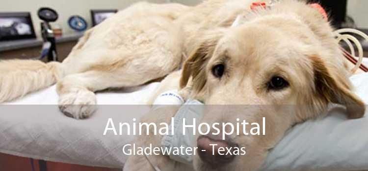Animal Hospital Gladewater - Texas