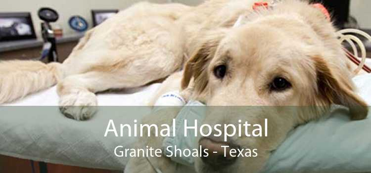 Animal Hospital Granite Shoals - Texas