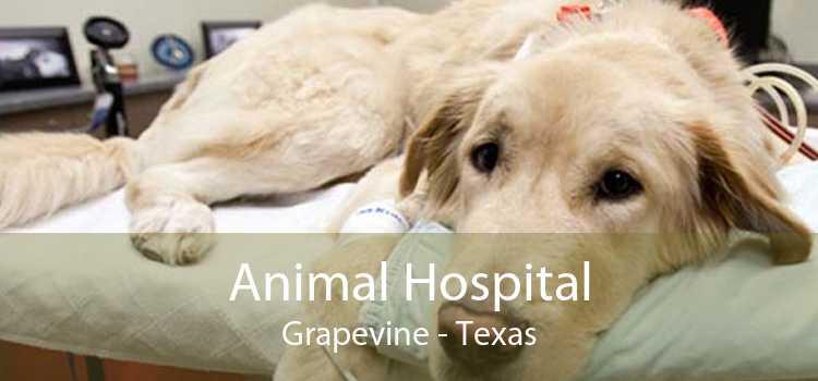 Animal Hospital Grapevine - Texas