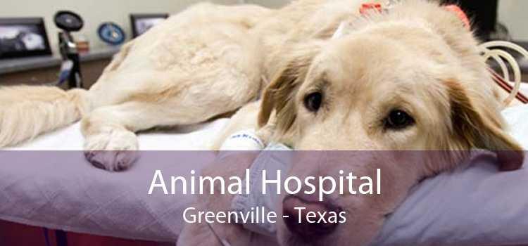 Animal Hospital Greenville - Texas