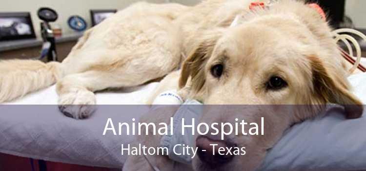 Animal Hospital Haltom City - Texas