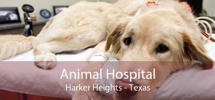 Animal Hospital Harker Heights - Texas