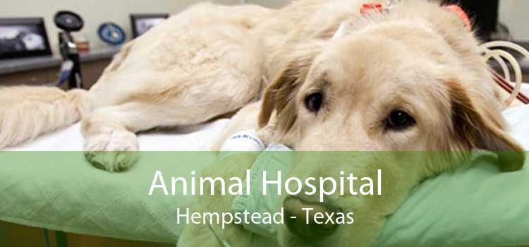 Animal Hospital Hempstead - Texas