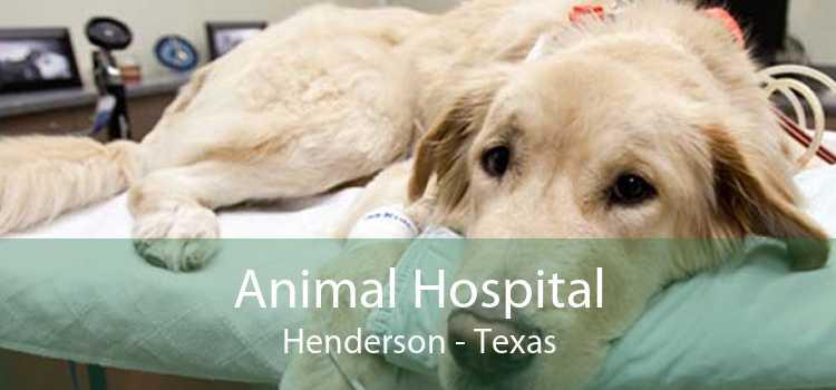 Animal Hospital Henderson - Texas