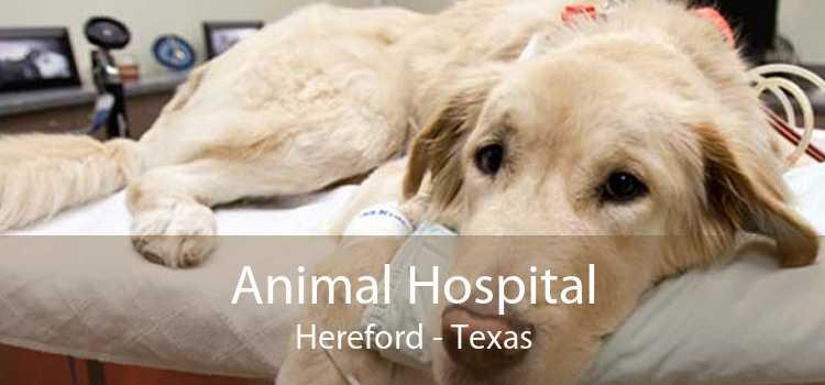 Animal Hospital Hereford - Texas
