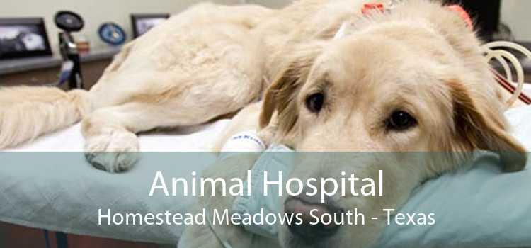 Animal Hospital Homestead Meadows South - Texas