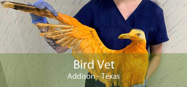 Bird Vet Addison - Texas
