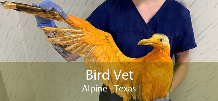 Bird Vet Alpine - Texas