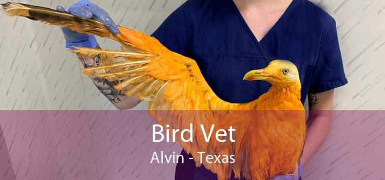 Bird Vet Alvin - Texas