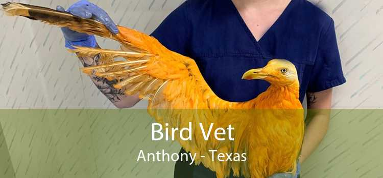 Bird Vet Anthony - Texas