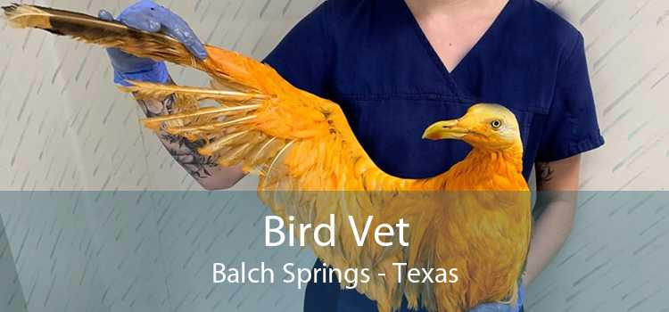 Bird Vet Balch Springs - Texas