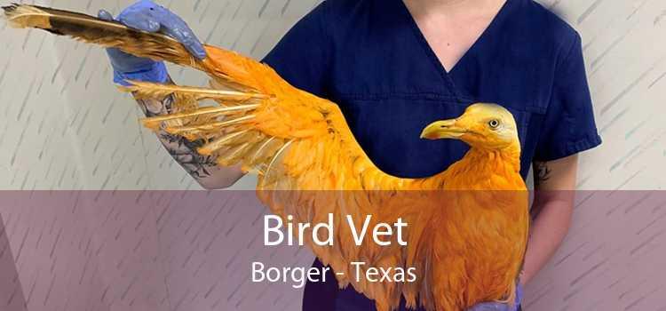 Bird Vet Borger - Texas