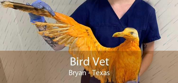 Bird Vet Bryan - Texas