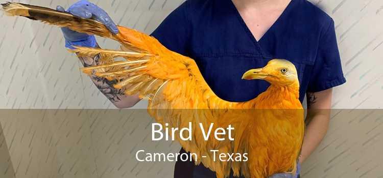 Bird Vet Cameron - Texas