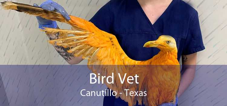 Bird Vet Canutillo - Texas