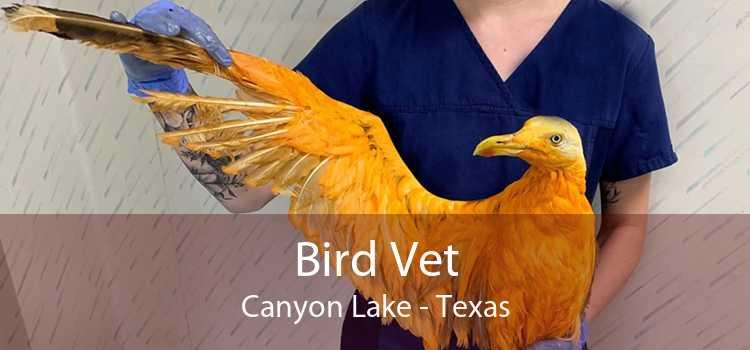 Bird Vet Canyon Lake - Texas