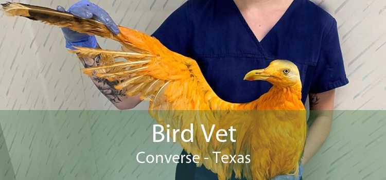 Bird Vet Converse - Texas