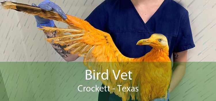 Bird Vet Crockett - Texas