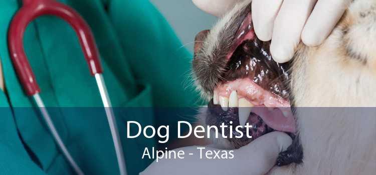 Dog Dentist Alpine - Texas