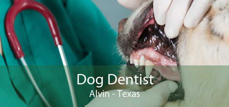 Dog Dentist Alvin - Texas