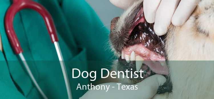 Dog Dentist Anthony - Texas