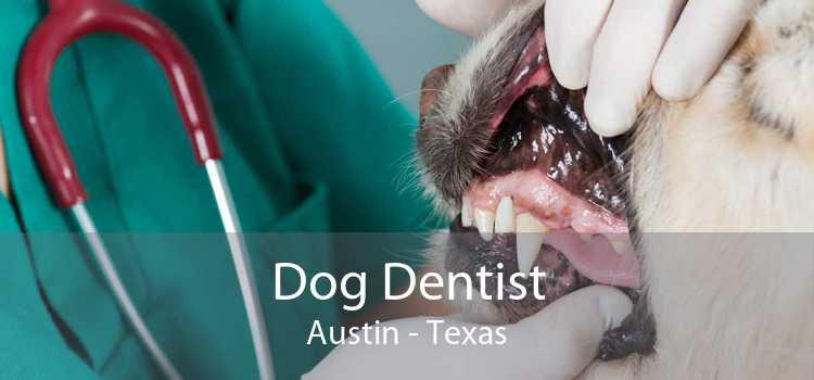 Dog Dentist Austin - Texas