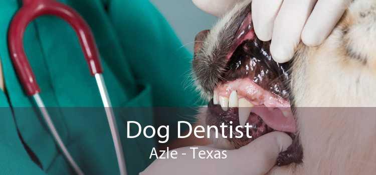 Dog Dentist Azle - Texas