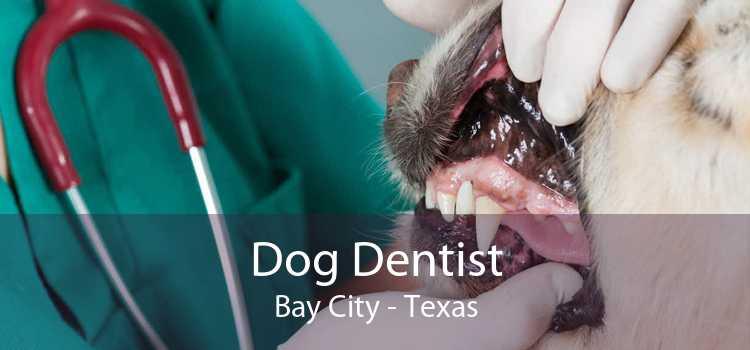 Dog Dentist Bay City - Texas