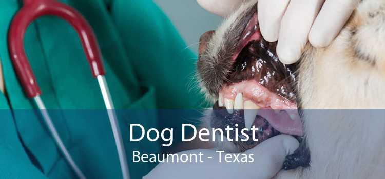 Dog Dentist Beaumont - Texas
